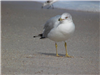 city of vero beach photograph of seagull