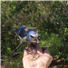 city of vero beach photograph of blue jay on a persons hand